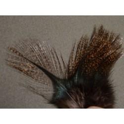 Flor de Escoba - 12 feathers