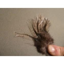 Corzuno claro - 12 feathers
